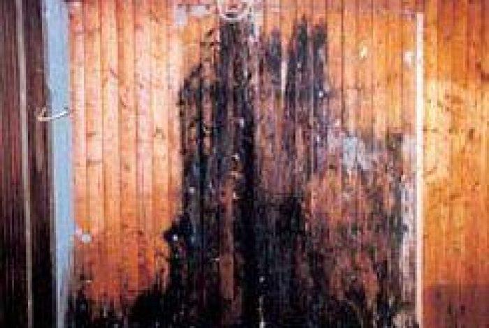 Beispiel von Schimmelbefall nach dem Ausbauen der alten Dusche 7