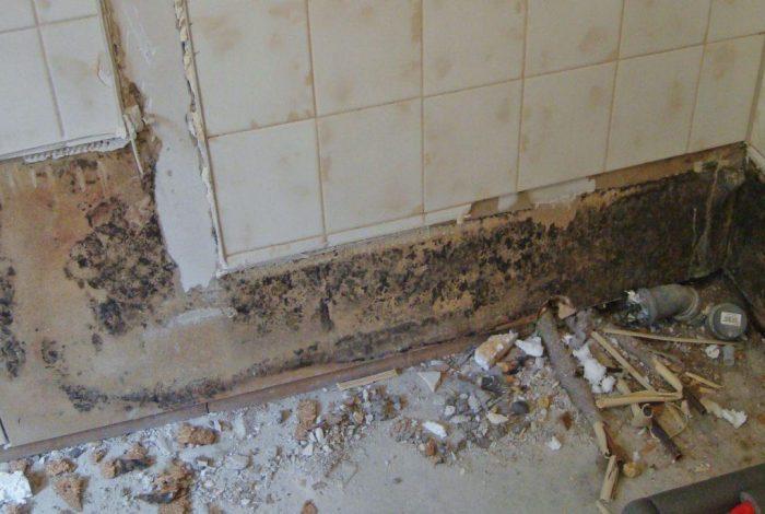 Beispiel von Schimmelbefall nach dem Ausbauen der alten Dusche 3